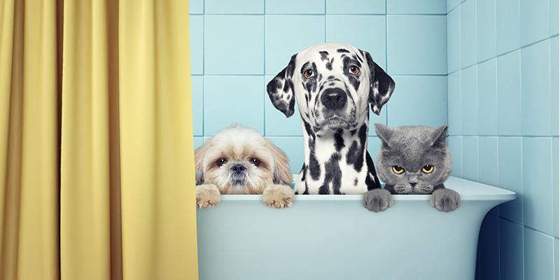 Wichtige Reinigungstipps Die Jeder Tierbesitzer Wissen Sollte Sauberkeit Und Gesundheit Reinigung Magazin Genius Online Shop